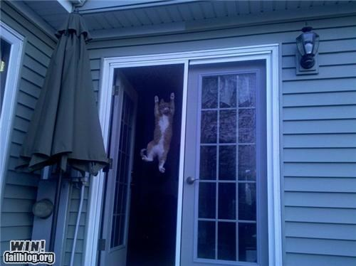cat hang in there pets screen door - 4748157696