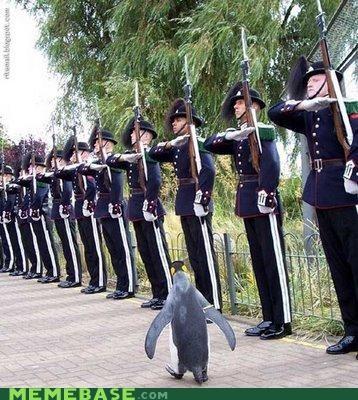 animemes Memes nothing penguin sitting tight - 4748255232