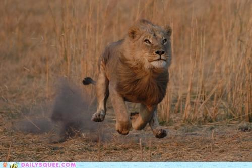 acting like animals barrier breaking dream come true flying freedom lion running sound supersonic - 4748375808