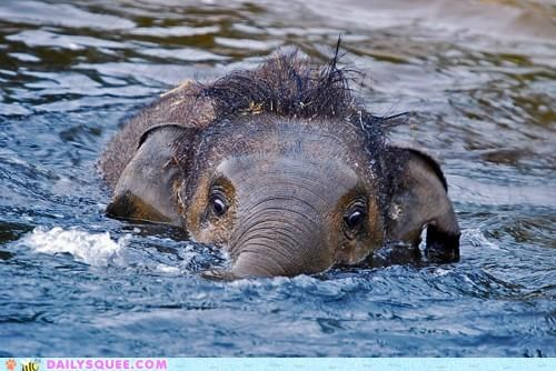 acting like animals assignment baby elephant freighter mission noms peanut periscope submarine swimming - 4748402688