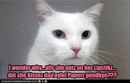 after,caption,captioned,cat,confused,goodbye,kisses,kissing,lipstick,toilet paper,why,wonder,wondering