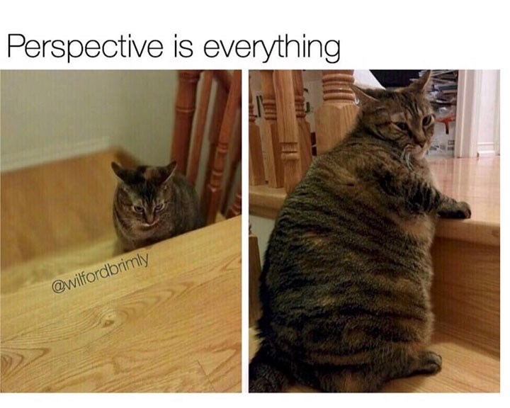 Memes Caturday Cats - 4749061