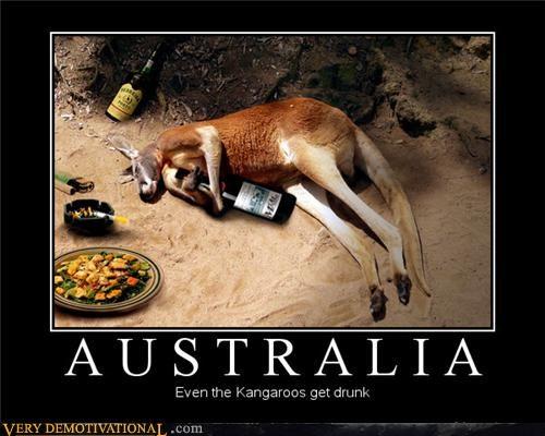 australia,drunk,hilarious,kangaroo