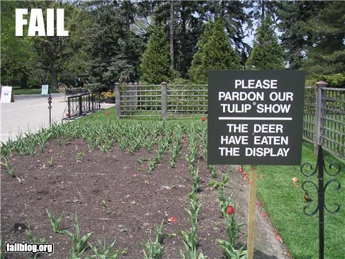 Tulip display fail