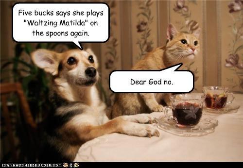 bet cat corgi do not want dollars five horrified mixed breed song spoons title waltzing matilda - 4750403840