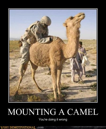 camel hilarious mounting soldier - 4750568704
