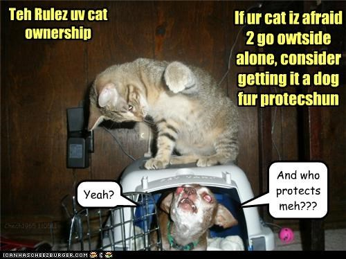 Teh Rulez uv cat ownership If ur cat iz afraid 2 go owtside alone, consider getting it a dog fur protecshun Yeah? And who protects meh??? Chech1965 110511