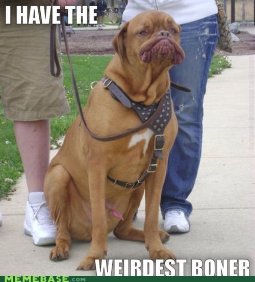 broner dogs flight Memes rocket - 4750707200