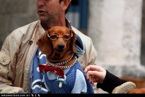 binkie,bowtie,dachshund,glasses,pacifier,shirt,vest
