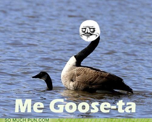 geese,goose,literalism,me gusta,meme,Rage Comics