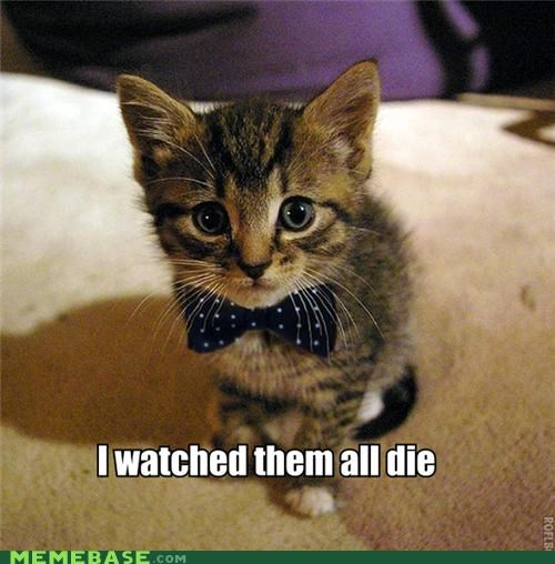 animemes,bowtie,cat,happy cat irl,Happy Kitten,kitten,seen