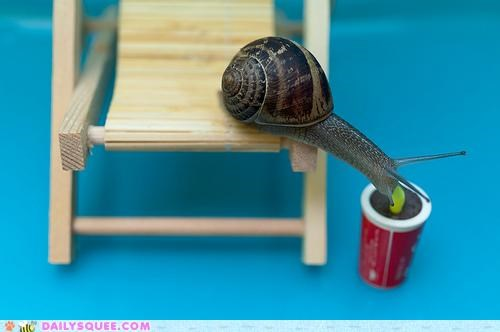 acting like animals,backyard,chair,drink,lazing,lazy,perfect,relaxing,snail