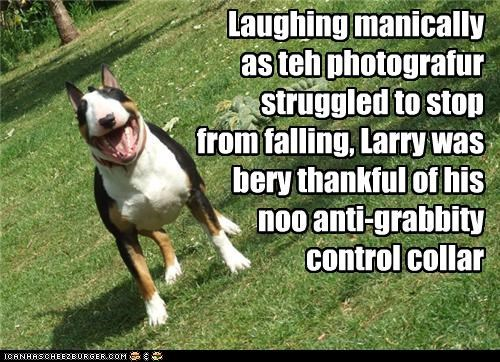 Laughing manically as teh photografur struggled to stop from falling, Larry was bery thankful of his noo anti-grabbity control collar