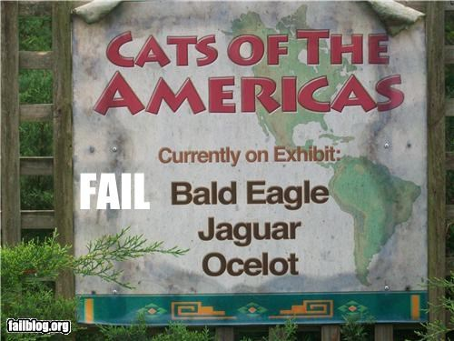 animals category Cats classification eagle failboat g rated signs zoo - 4752721408