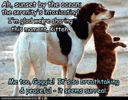 Me too, Goggie! It's so breathtaking & peaceful - it seems surreal. Ah, sunset by the ocean; the serenity's intoxicating! I'm glad we're sharing this moment, Kitteh.