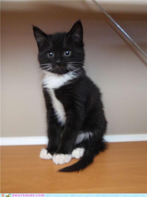 baby cat homophone kitten poser poseur posing reader squees - 4754019072