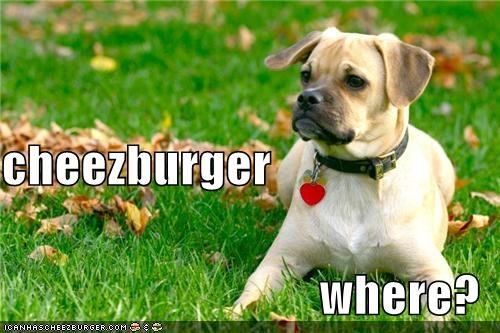 Cheezburger Image 4754061568