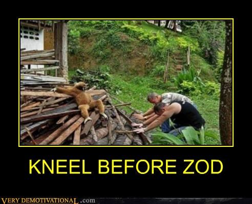 hilarious,kneel,monkey,wtf,zod