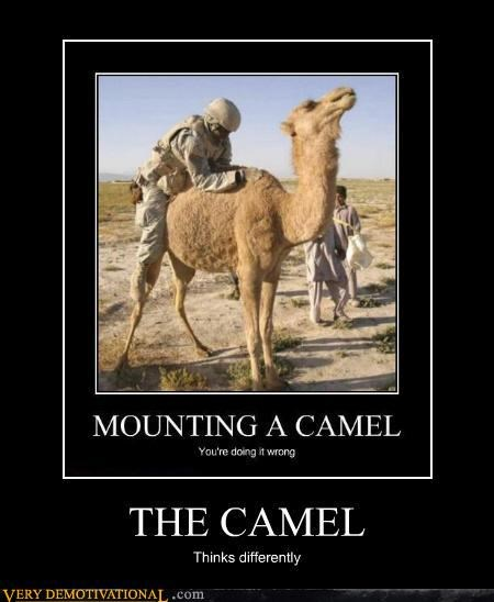 camel fun hilarious mounting - 4754799360