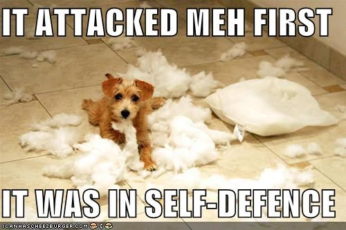 attacked,excuse,first,mess,mixed breed,Pillow,puppy,reason,scottish terrier,self defense