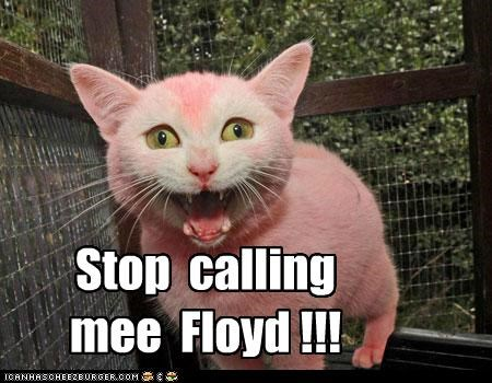 angry caption captioned cat color dye name pink pink floyd request stop upset - 4755271936