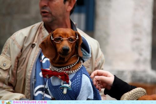acting like animals,bowtie,dachshund,dapper,dressed up,glasses,moneyed,pretentious,rich,snooty