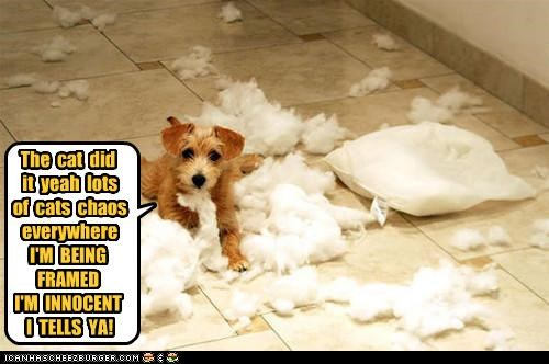 The cat did it yeah lots of cats chaos everywhere I'M BEING FRAMED I'M INNOCENT I TELLS YA!