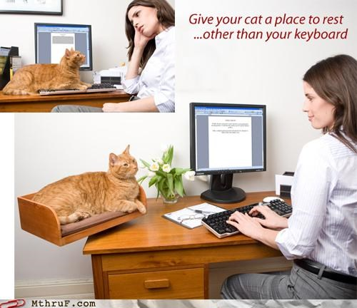 Cats Keyboard Cat workplace ergonomics - 4756103424