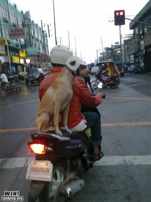 helmets passenger pets saftey scooter - 4756422912