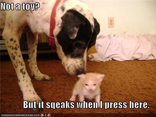 button cat confused dalmatian kitten not press squeaks toy