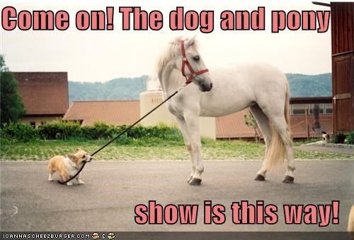 come on corgi dogs guiding herding horse pony pulling rope show this way