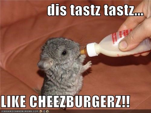 Cheezburger Image 4757183744