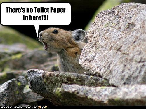 caption captioned here no pika shouting toilet paper upset - 4757636352