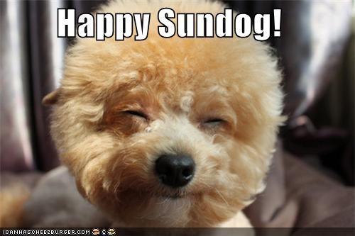Fluffy happy happy sundog poodle smile Sundog - 4757845248