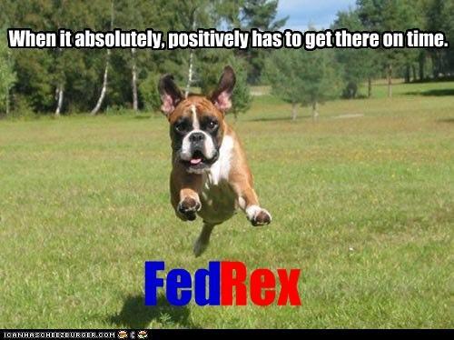 boxer fedex motto pun puppy running slogan