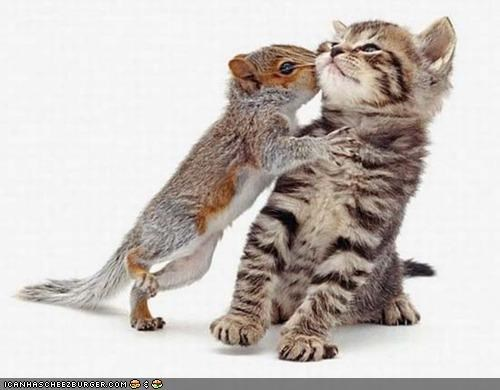 cyoot kitteh of teh day friends Interspecies Love KISS squirrel - 4758138624