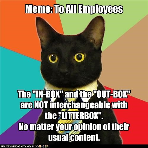 animemes Business Cat cat content crap feces litterbox out