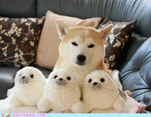 acting like animals friends names naming nomenclature opinion problem quote shiba inu stuffed animal stuffed animals - 4758511104