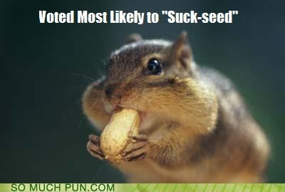chipmunk,double meaning,FAIL,homophones,literalism,most likely,seed,succeed,suck,voted