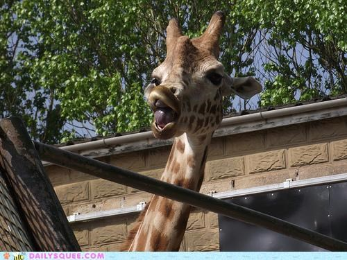 acting like animals derp derpface giraffes insulting mocking paraphrase paraphrasing quoting romeo and juliet shakespeare william shakespeare - 4758593024