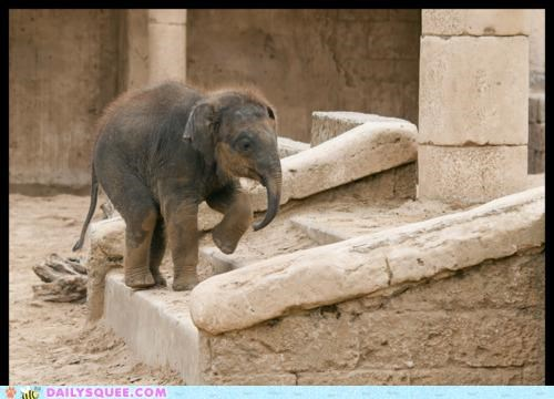 baby,baby steps,biggest,climbing,elephant,little,perspective,stairs,stepping,steps
