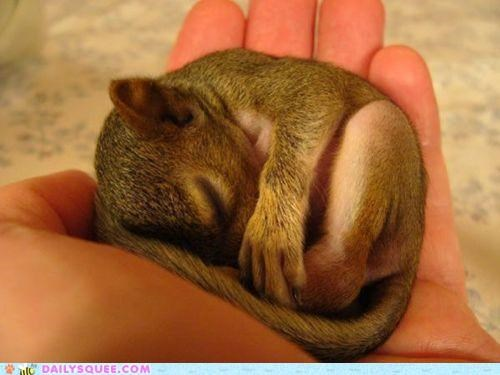 asleep baby curled up hammock hand nap napping sleeping squirrel - 4758748416