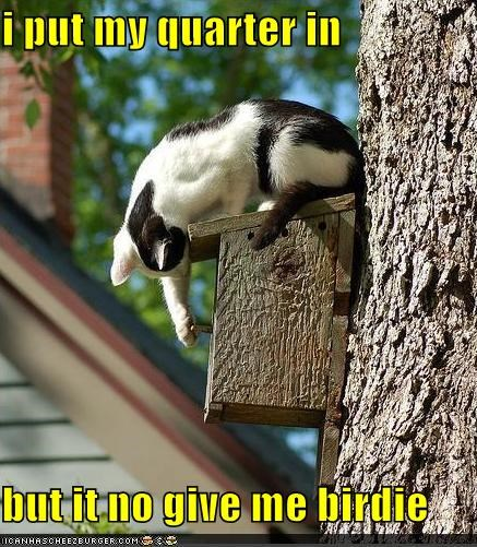 birdhouse birdie caption captioned cat confused dispenser FAIL give in no nom noms put quarter treat - 4758870016