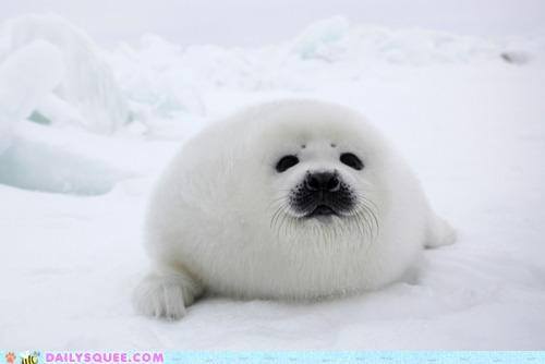 adorable baby blob fuzzy precipice seal squee explosion too cute