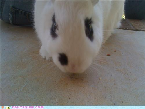 bunny camera do not want grumpy happy bunday picture posing rabbit reader squees - 4758995200
