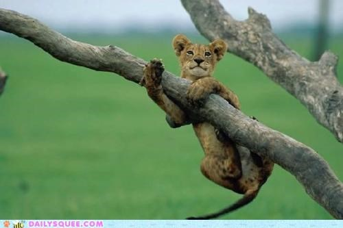 answer,baby,branch,cub,dangling,hanging,hanging out,lion,pun,question,tree