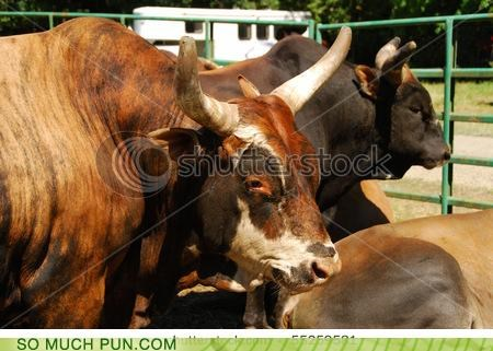 double meaning literalism livestock Photo recursion recursive shortening stock stock photo - 4759641088
