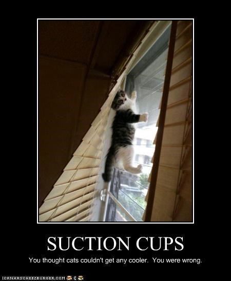 caption captioned cat climbing cooler cups kitten suction suction cups thought wall wrong