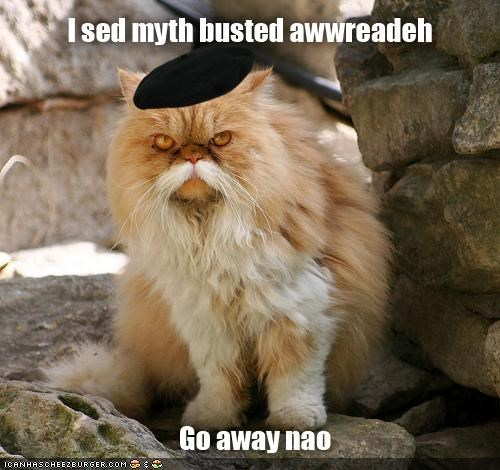 beret best of the week bust busted caption captioned cat Command face go away Hall of Fame I Can Has Cheezburger myth mythbusters persian totally looks like - 4759716608