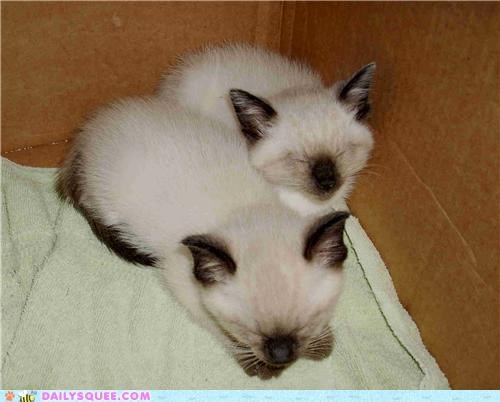 adoption cat Cats kitten reader squees siblings story touching - 4760081408